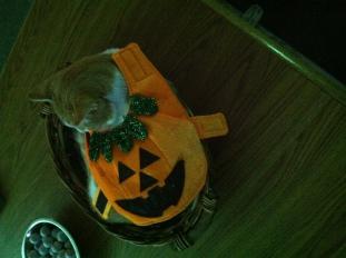 Pumpkin in his Halloween costume